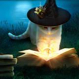 miniature Chatte sorcière