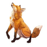 miniature Dessiner un renard