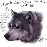 miniature Dessiner une tête de loup