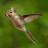 miniature Écureuil perroquet colibris