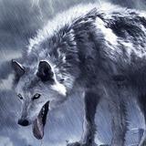 miniature Dessiner un loup géant