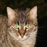 miniature Supprimer les yeux verts ou rouges
