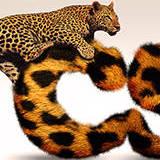 miniature Texte pelage léopard