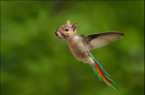 Écureuil perroquet colibris