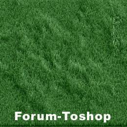 Texture pelouse