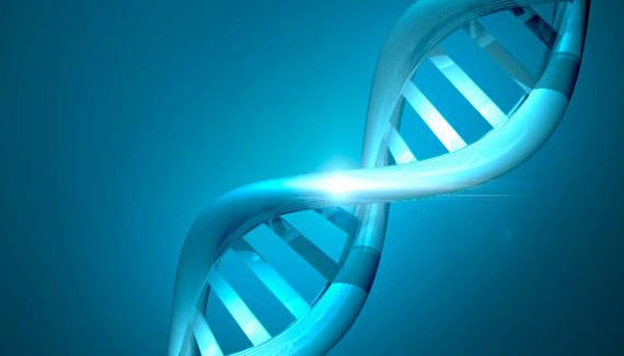 Brin d'ADN en 3D