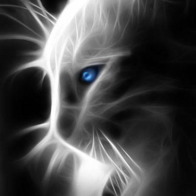 Effet fractalius sur une photo de chat