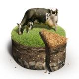 miniature Gâteau de terre