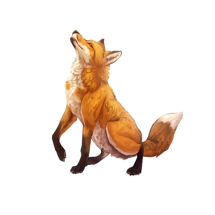 Dessiner un renard