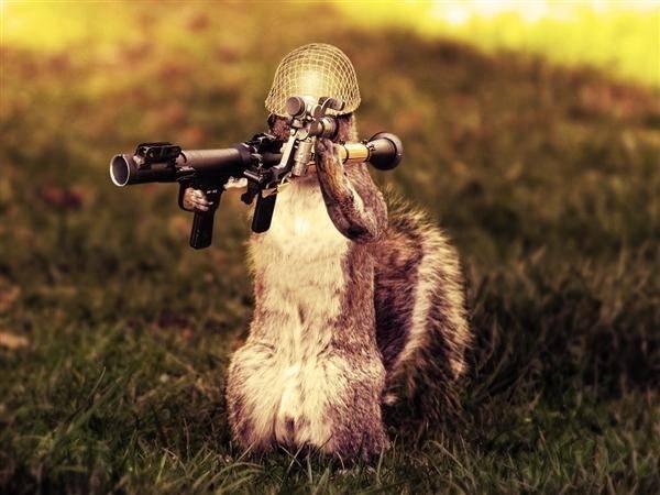 Un écureuil armé jusqu'aux dents