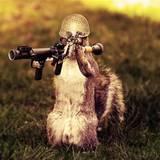 miniature Un écureuil armé jusqu'aux dents