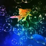 miniature Composer avec des bulles