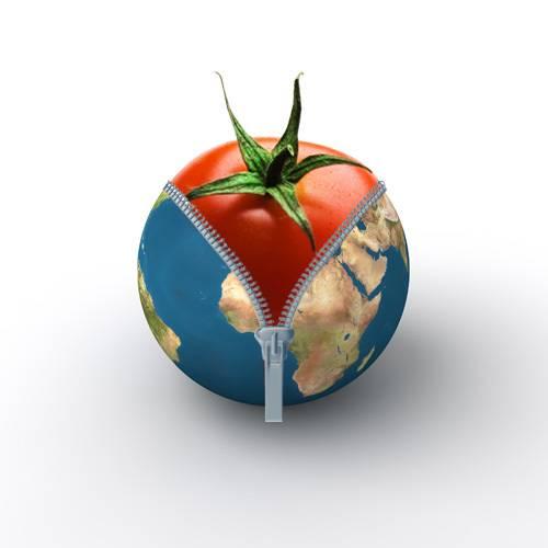 La tomate sous Terre