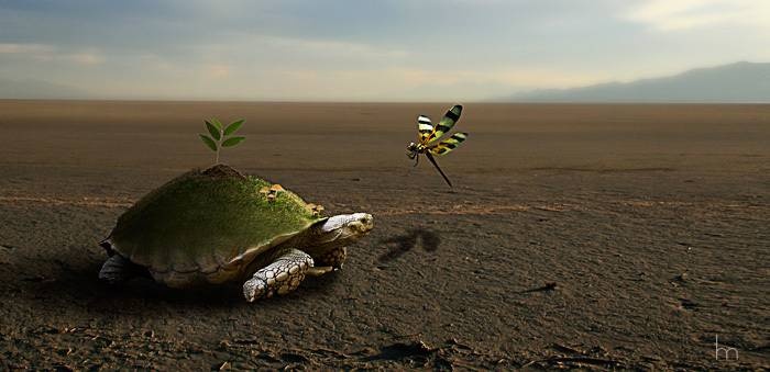 "Photomontage ""Tortue terrestre"""