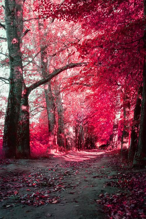 Effet infrarouge