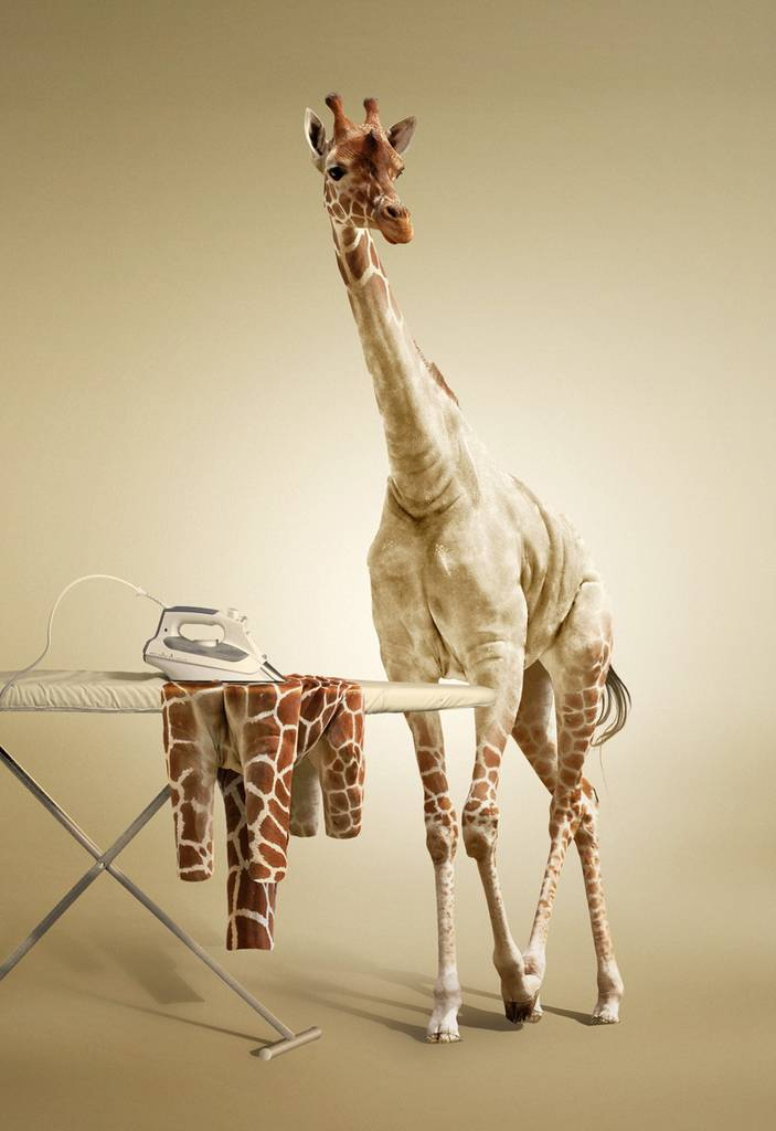 Girafe et repassage
