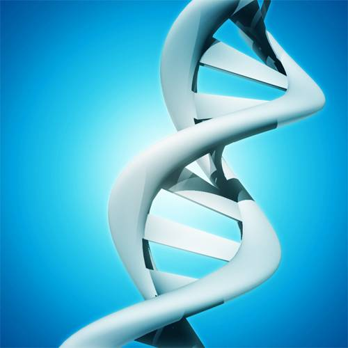 Filament d'ADN
