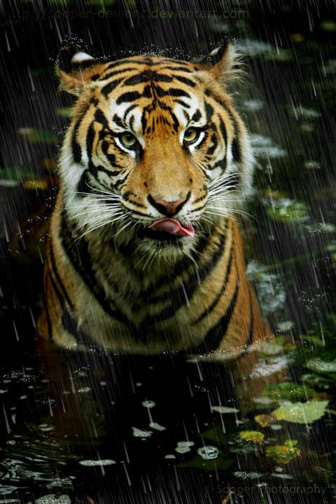 Ajouter de la pluie sur une photographie