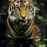 miniature Ajouter de la pluie sur une photographie