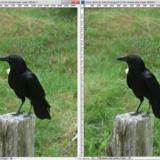miniature Effacer un élément d'une photo avec Photoshop et la fonction Contenu pris en compte