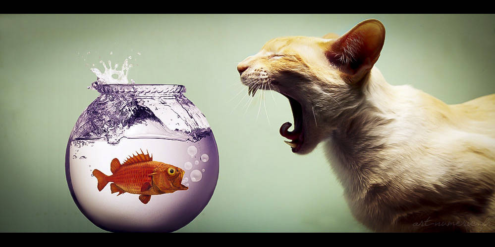Chat vs poisson rouge